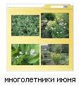 папки для картинок